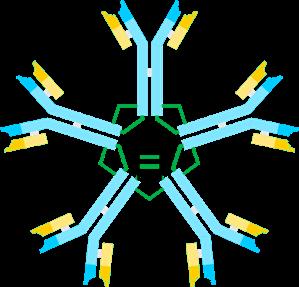 Макроглобулинемия- Мимотоп(ы)