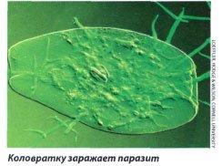 Бактерии в фактах