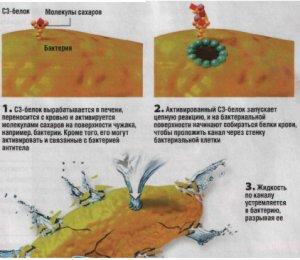 Иммунитет - химическая атака