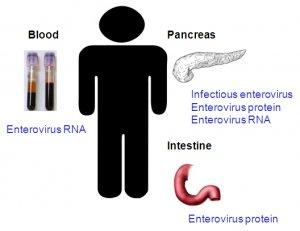 Противоэпидемические мероприятия в очагах энтеровирусных инфекций