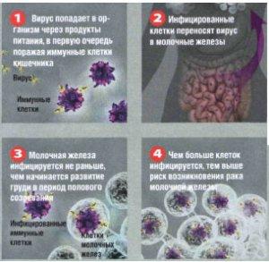 Бактерии и вирусы: скрытая угроза