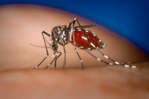 О мониторинге за переносчиками арбовирусных инфекций