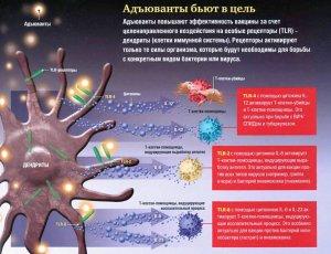 Иммунные учения