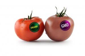 Опасны ли ГМО-продукты для человека?